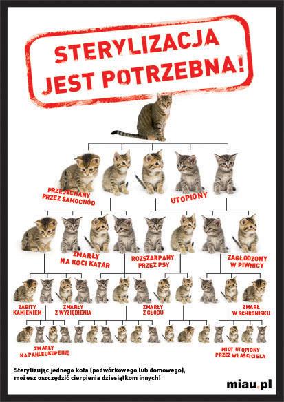 b890ae723f7a82 Pomagajmy kotom przetrwać zimę | Fundacja Viva! bloguje